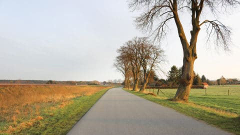 Straße auf dem Land mit Bäumen ohne Blätter