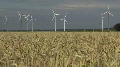 Kornfeld vor Windpark Breesen
