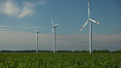 Maisfeld und drei Windenergieanlagen im Hintergrund