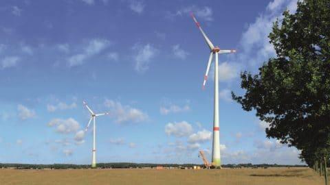 Baumreihe und zwei Windenergieanlage im Hintergrund