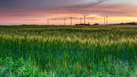 Getreidefeld mit Windräder im Abendhimmel