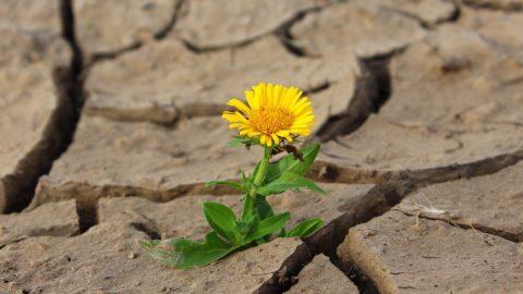 Blume wächst aus ausgetrocknetem Boden