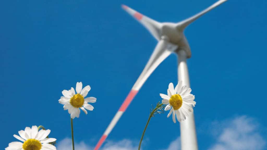 Kornblumen und Windrad vor blauem Himmel