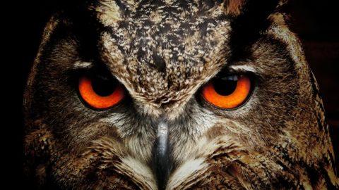 Zum Thema Artenschutz Nahaufnahme Eulenkopf