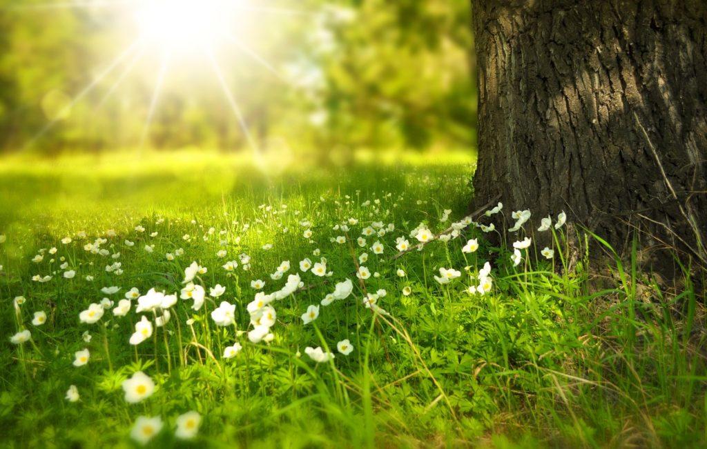 Sonne scheint auf Wiese und Baum